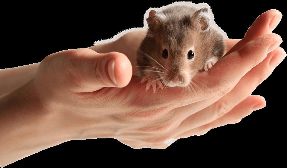 hamster_hand